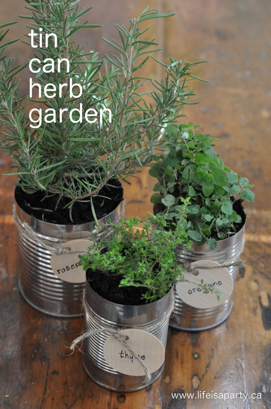 Herb Garden ideas for inside your home. Grow herbs all year long.